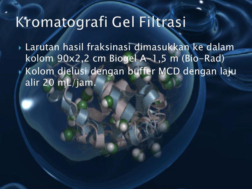 Larutan hasil fraksinasi dimasukkan ke dalam kolom 90x2,2 cm Biogel A-1,5 m (Bio-Rad)  Kolom dielusi dengan buffer MCD dengan laju alir 20 mL/jam.