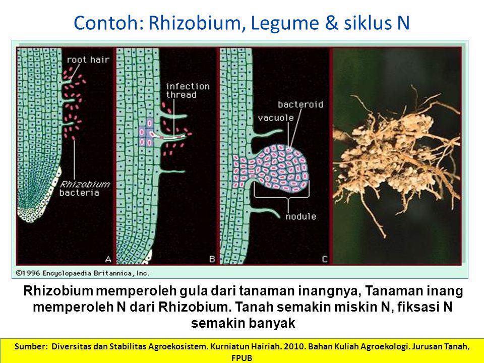 Contoh: Rhizobium, Legume & siklus N Rhizobium memperoleh gula dari tanaman inangnya, Tanaman inang memperoleh N dari Rhizobium. Tanah semakin miskin