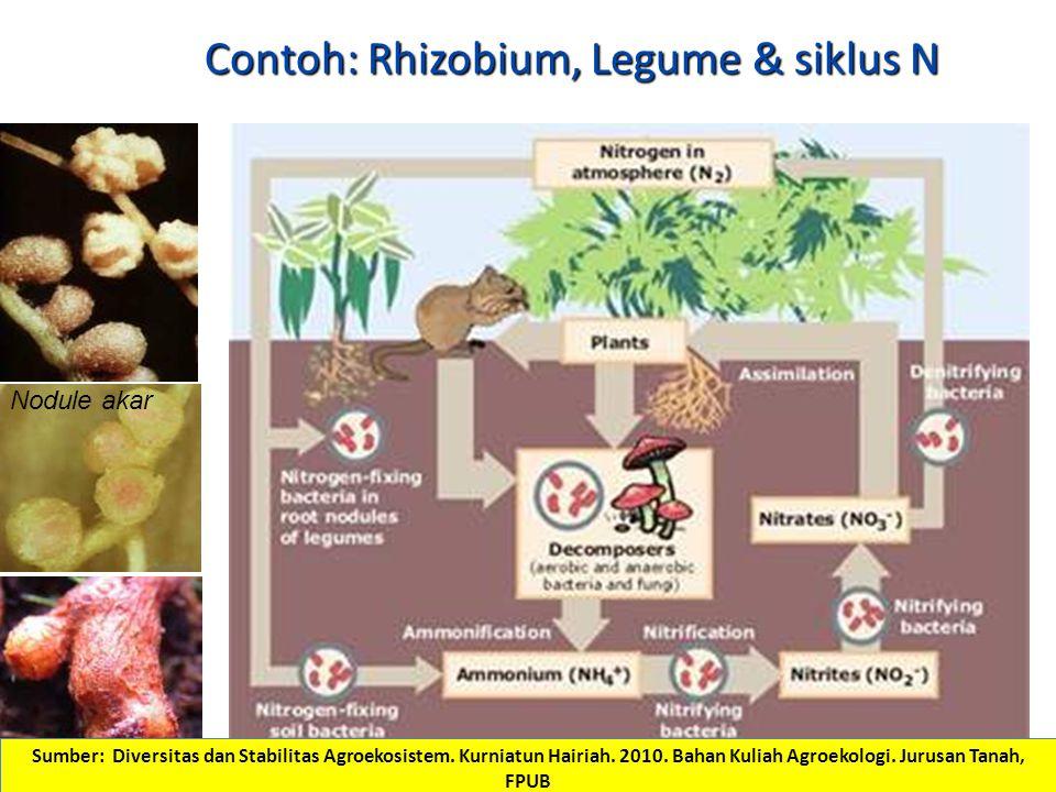 Contoh: Rhizobium, Legume & siklus N Nodule akar Nodule batang Sumber: Diversitas dan Stabilitas Agroekosistem.