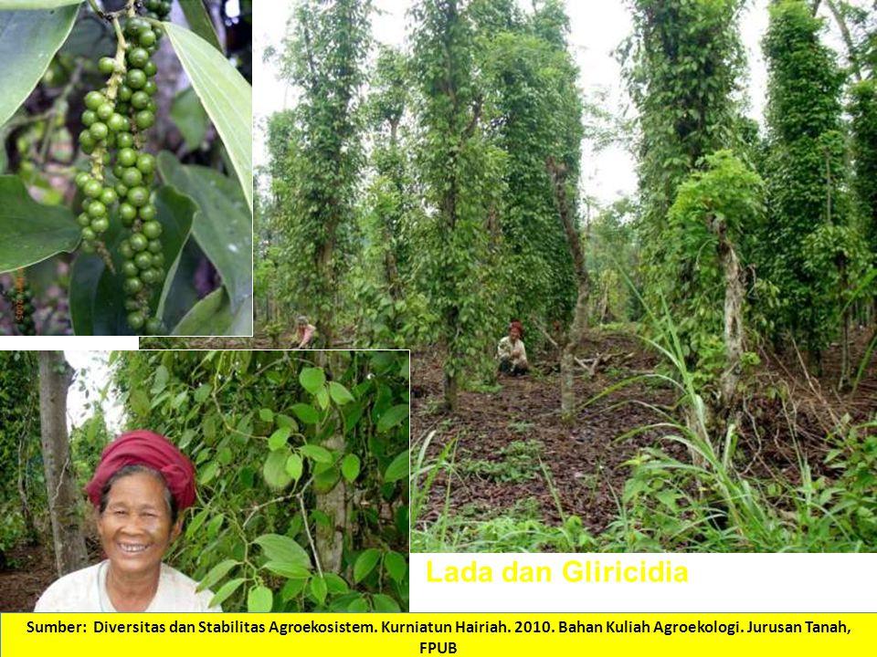 (Foto: Kurniatun Hairiah) Lada dan Gliricidia Sumber: Diversitas dan Stabilitas Agroekosistem.