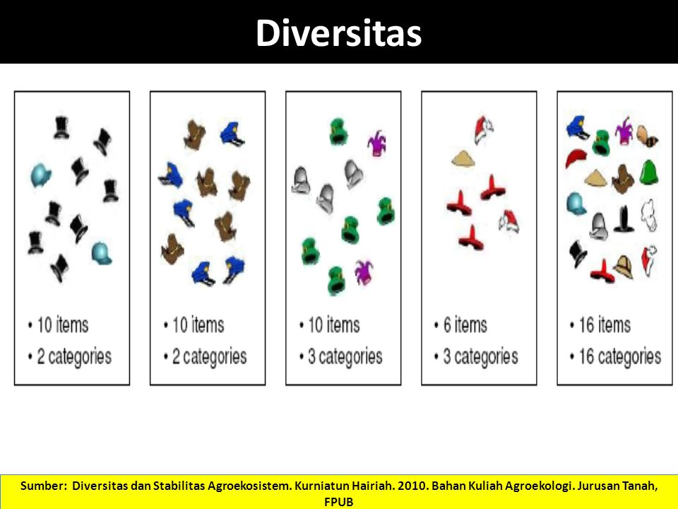 Diversitas Sumber: Diversitas dan Stabilitas Agroekosistem. Kurniatun Hairiah. 2010. Bahan Kuliah Agroekologi. Jurusan Tanah, FPUB