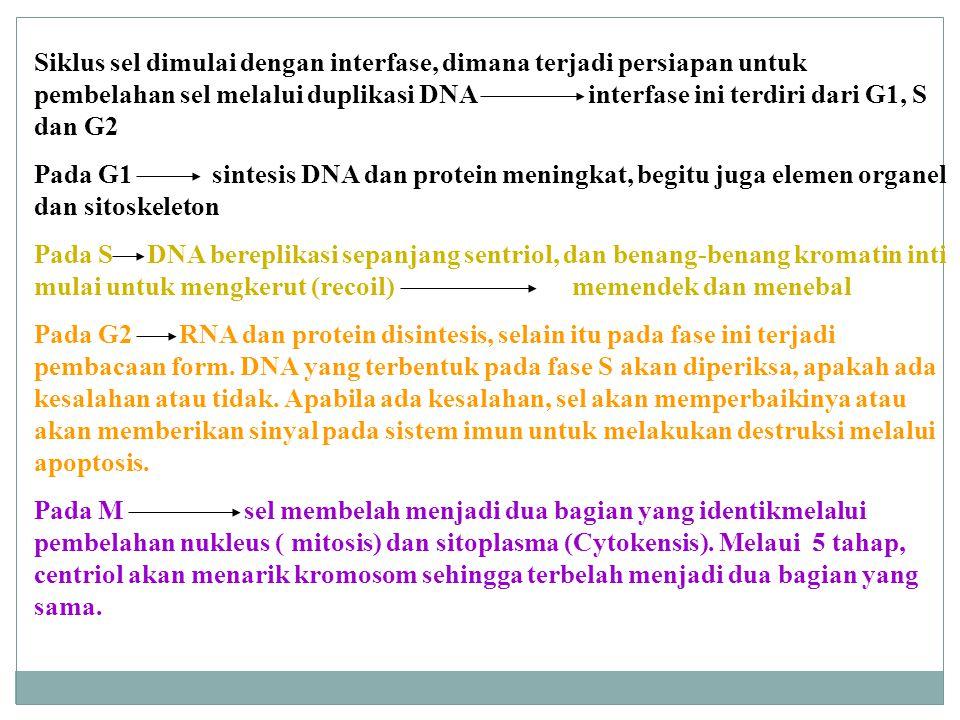 C.PERUBAHAN METABOLISME 1) Perubahan transport membran untuk glukosa dan asam amino.