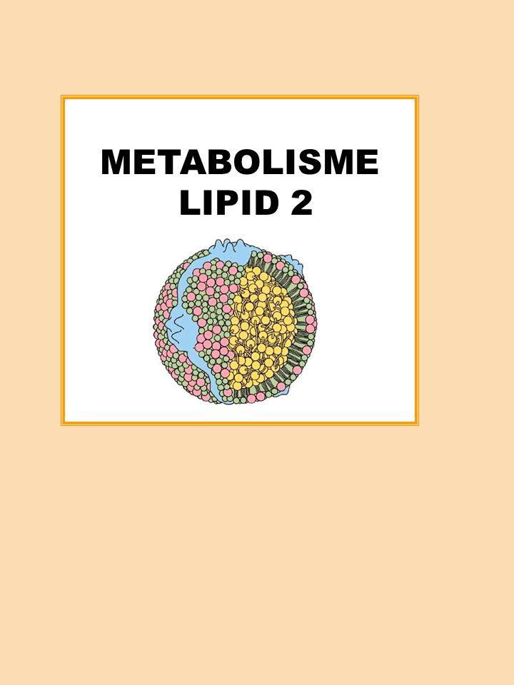 PERANAN HDL DALAM METABOLISME KOLESTEROL HDL memiliki peranan penting dalam metabolisme trigliserida dan metabolisme kolesterol HDL mengandung suatu enzim, yaitu LCAT : Lesitin Colesterol Asiltransferase, serta aktivator enzim tersebut ( Apoprotein A-I ) Fungsi enzim LCAT adalah : mengubah fosfolipid permukaan dan kolesterol bebas menjadi ester kolesteril serta lisolesitin Siklus HDL yang dikenal sebagai pengangkutan balik kolesterol : menjelaskan proses transportasi kolesterol dari jaringan ke hepar