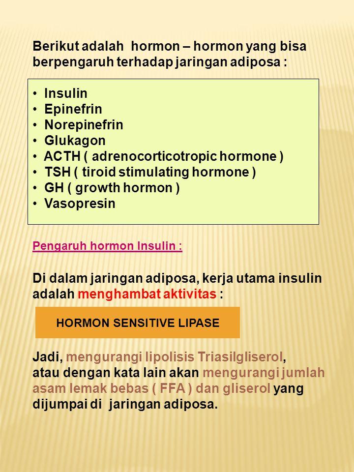 Berikut adalah hormon – hormon yang bisa berpengaruh terhadap jaringan adiposa : Insulin Epinefrin Norepinefrin Glukagon ACTH ( adrenocorticotropic ho