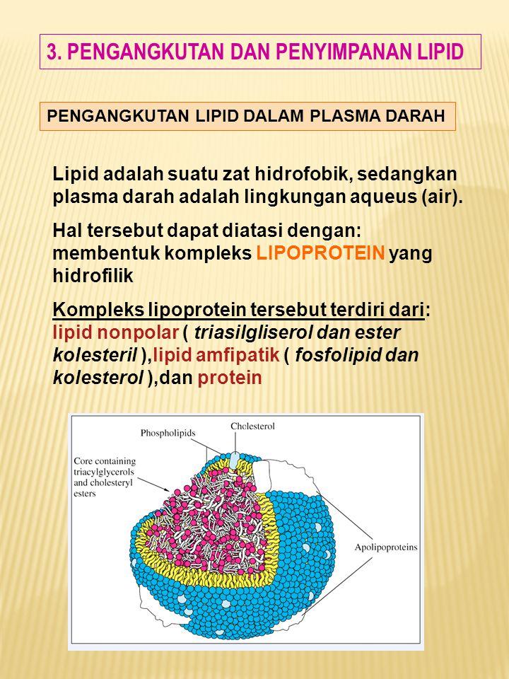 3. PENGANGKUTAN DAN PENYIMPANAN LIPID PENGANGKUTAN LIPID DALAM PLASMA DARAH Lipid adalah suatu zat hidrofobik, sedangkan plasma darah adalah lingkunga