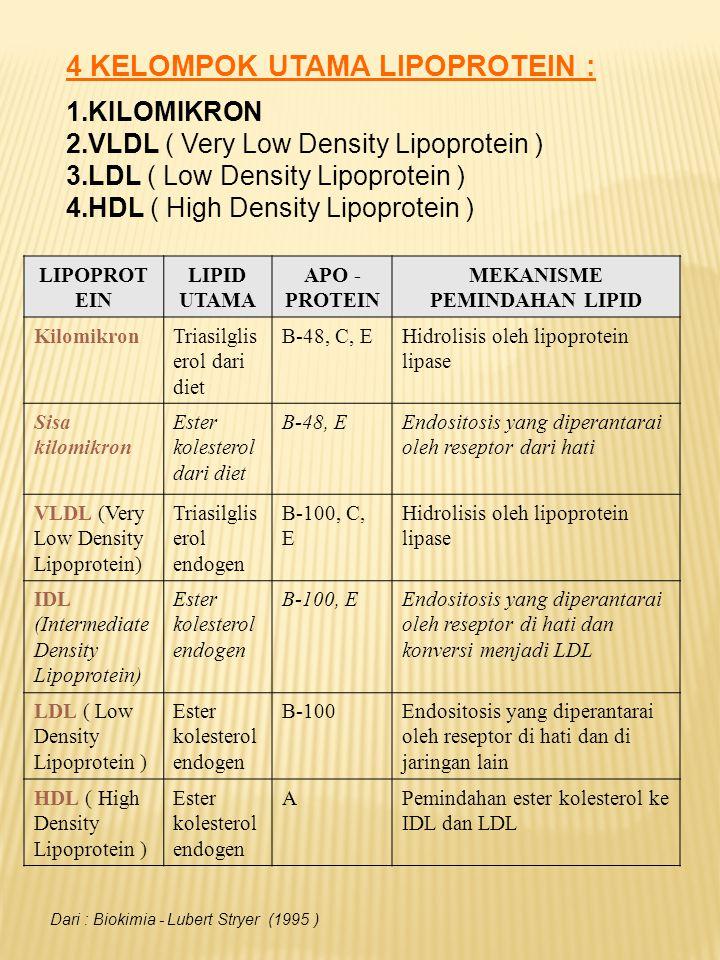 Lipoprotein mengandung ( satu atau lebih ) molekul protein yang disebut : APOPROTEIN.