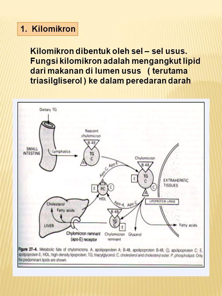 1. Kilomikron Kilomikron dibentuk oleh sel – sel usus. Fungsi kilomikron adalah mengangkut lipid dari makanan di lumen usus ( terutama triasilgliserol