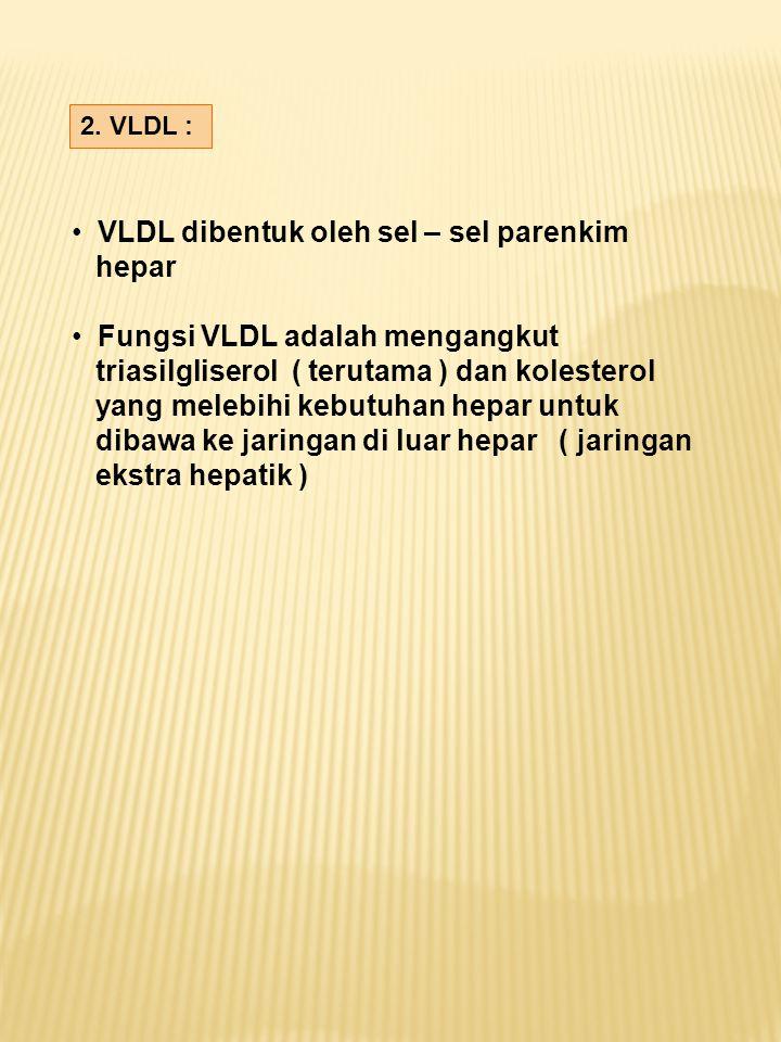 2. VLDL : VLDL dibentuk oleh sel – sel parenkim hepar Fungsi VLDL adalah mengangkut triasilgliserol ( terutama ) dan kolesterol yang melebihi kebutuha