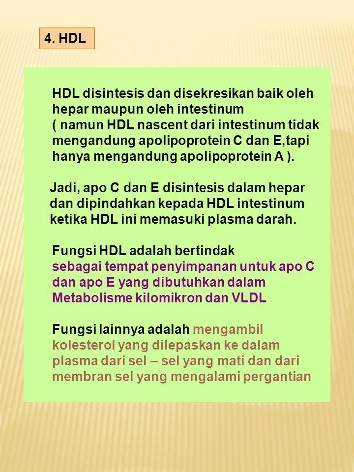 4. HDL HDL disintesis dan disekresikan baik oleh hepar maupun oleh intestinum ( namun HDL nascent dari intestinum tidak mengandung apolipoprotein C da