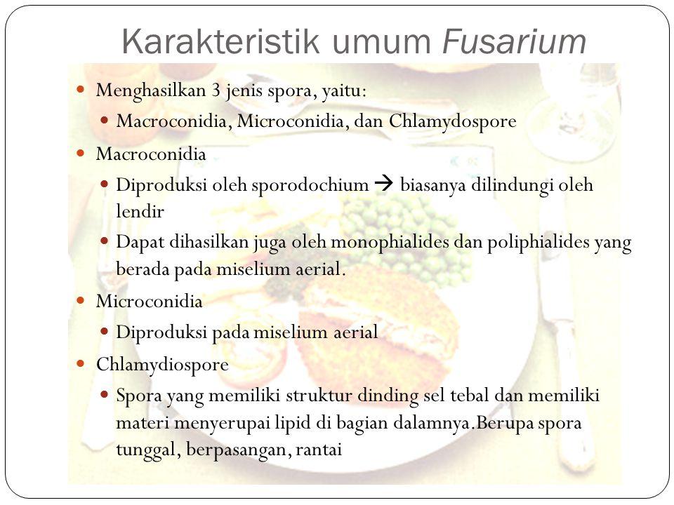 Karakteristik umum Fusarium Menghasilkan 3 jenis spora, yaitu: Macroconidia, Microconidia, dan Chlamydospore Macroconidia Diproduksi oleh sporodochium