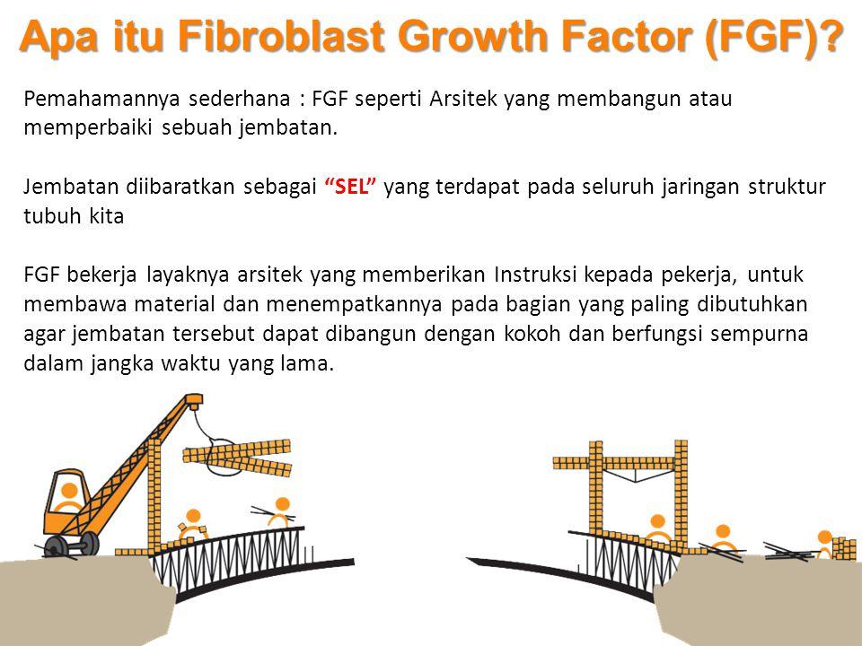 """Pemahamannya sederhana : FGF seperti Arsitek yang membangun atau memperbaiki sebuah jembatan. Jembatan diibaratkan sebagai """"SEL"""" yang terdapat pada se"""