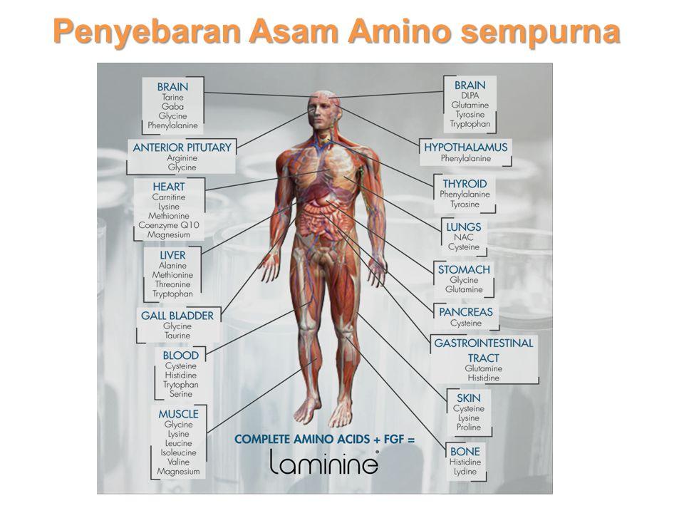Penyebaran Asam Amino sempurna