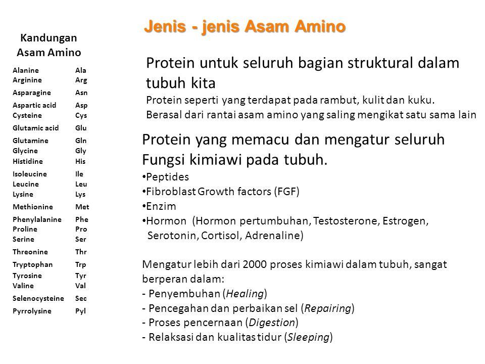 Kandungan Asam Amino Protein untuk seluruh bagian struktural dalam tubuh kita Protein seperti yang terdapat pada rambut, kulit dan kuku. Berasal dari
