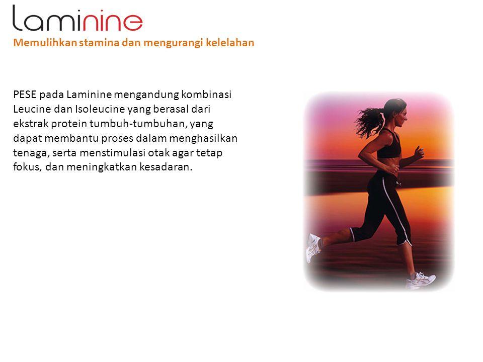 Memulihkan stamina dan mengurangi kelelahan PESE pada Laminine mengandung kombinasi Leucine dan Isoleucine yang berasal dari ekstrak protein tumbuh-tu