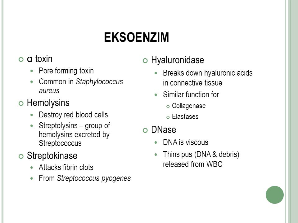 EKSOENZIM α toxin Pore forming toxin Common in Staphylococcus aureus Hemolysins Destroy red blood cells Streptolysins – group of hemolysins excreted b