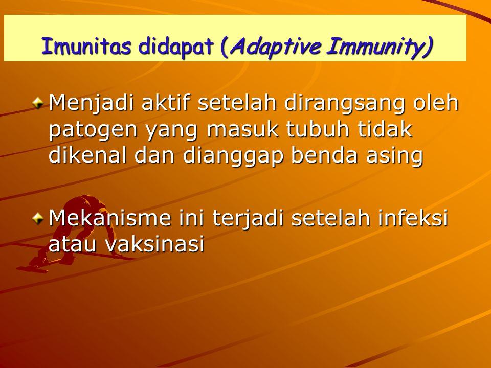 Imunitas didapat (Adaptive Immunity) Menjadi aktif setelah dirangsang oleh patogen yang masuk tubuh tidak dikenal dan dianggap benda asing Mekanisme ini terjadi setelah infeksi atau vaksinasi