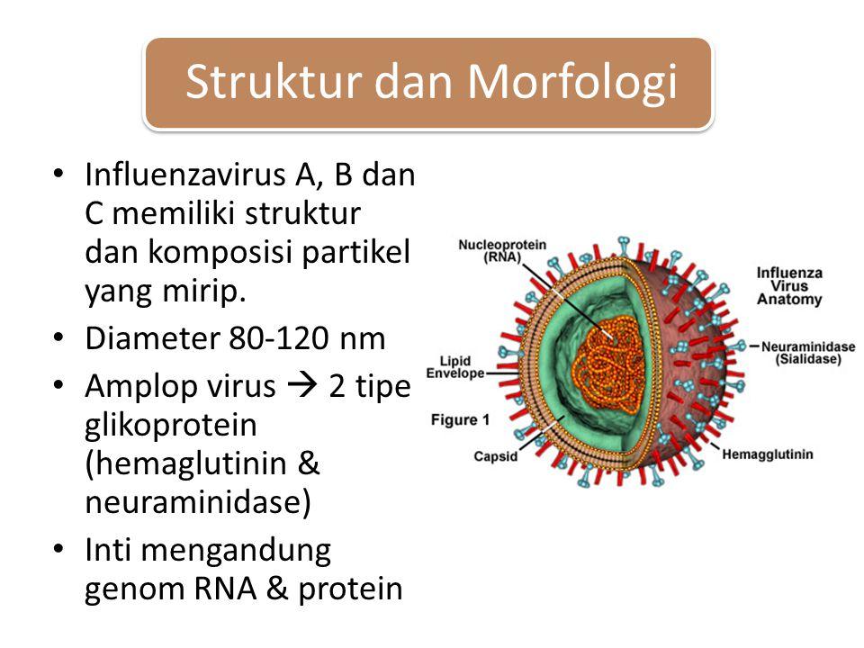 Struktur dan Morfologi Influenzavirus A, B dan C memiliki struktur dan komposisi partikel yang mirip.