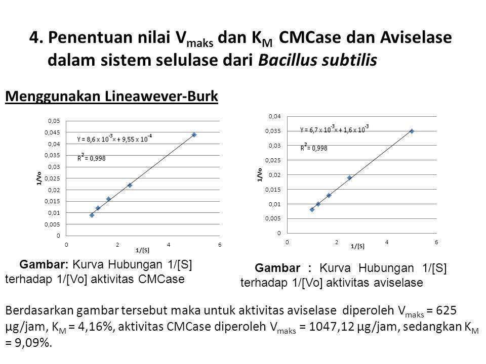 4. Penentuan nilai V maks dan K M CMCase dan Aviselase dalam sistem selulase dari Bacillus subtilis Gambar : Kurva Hubungan 1/[S] terhadap 1/[Vo] akti