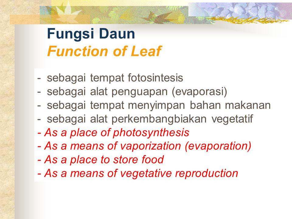 Fungsi Daun Function of Leaf - sebagai tempat fotosintesis - sebagai alat penguapan (evaporasi) - sebagai tempat menyimpan bahan makanan - sebagai ala
