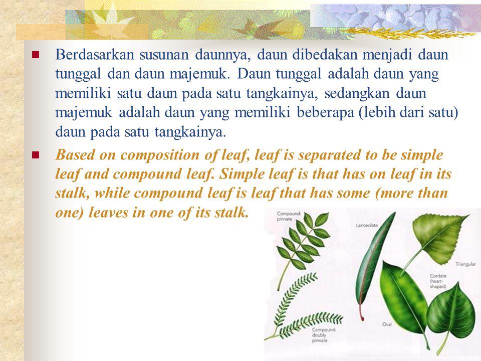 Berdasarkan susunan daunnya, daun dibedakan menjadi daun tunggal dan daun majemuk. Daun tunggal adalah daun yang memiliki satu daun pada satu tangkain
