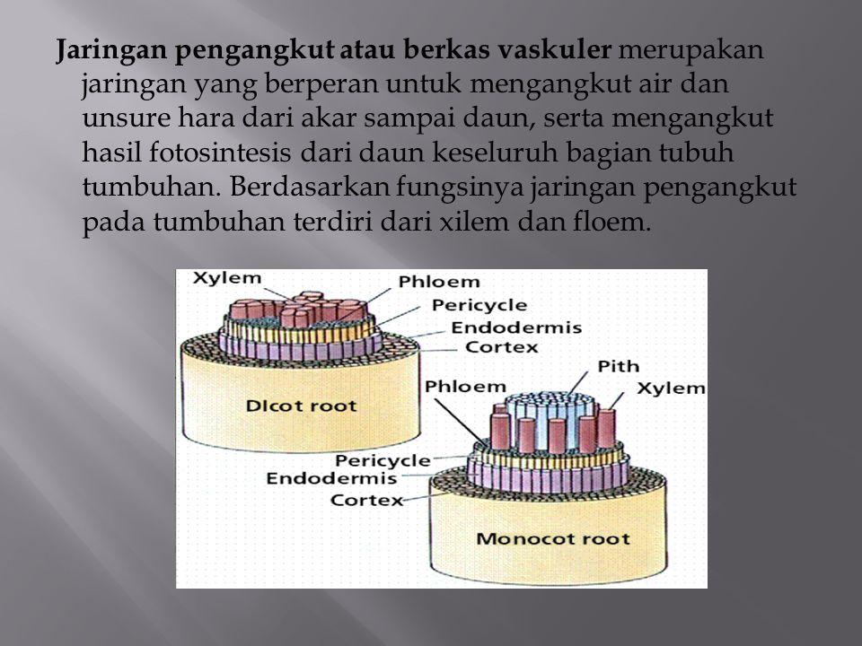 Jaringan pengangkut atau berkas vaskuler merupakan jaringan yang berperan untuk mengangkut air dan unsure hara dari akar sampai daun, serta mengangkut