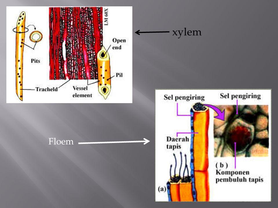 Jaringan gabus merupakan jaringan yang tersusun dari sel-sel parenkim gabus.