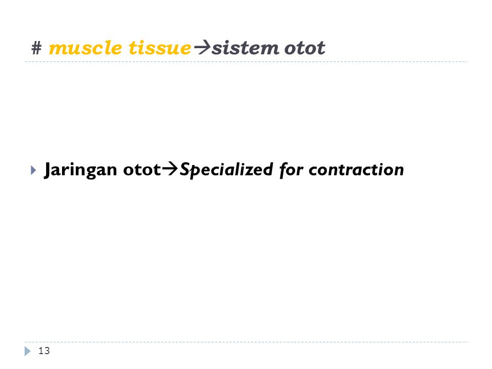 # muscle tissue  sistem otot 13  Jaringan otot  Specialized for contraction