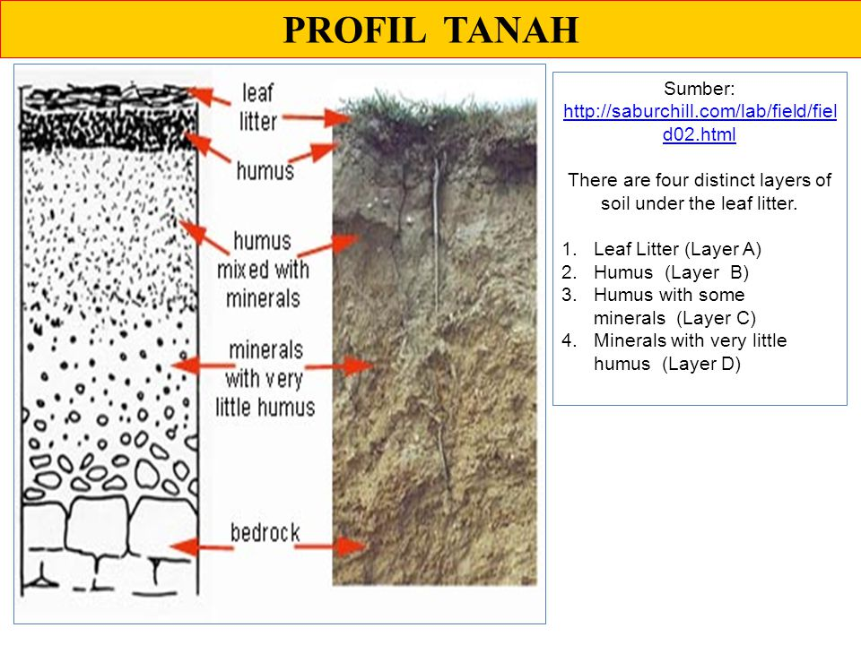 PROFIL TANAH Sumber: http://saburchill.com/lab/field/fiel d02.html http://saburchill.com/lab/field/fiel d02.html There are four distinct layers of soil under the leaf litter.