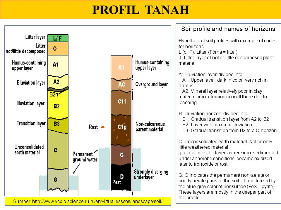 PROFIL TANAH Soil profile and names of horizons Hypothetical soil profiles with example of codes for horizons. L (or F): Litter (Förna = litter) 0: Li