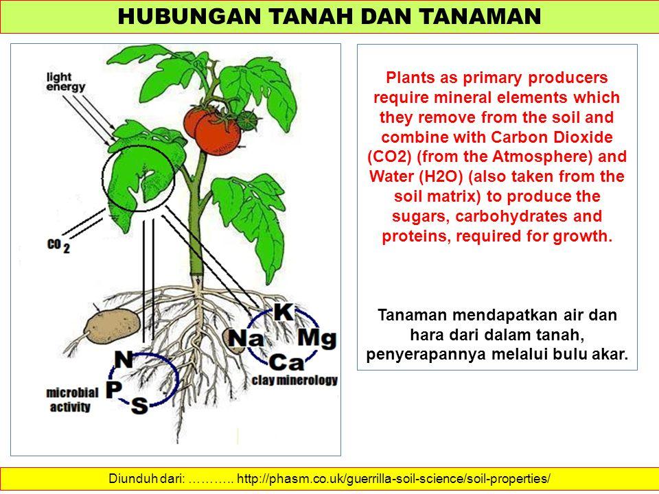 HUBUNGAN TANAH DAN TANAMAN Diunduh dari: ……….. http://phasm.co.uk/guerrilla-soil-science/soil-properties/ Plants as primary producers require mineral