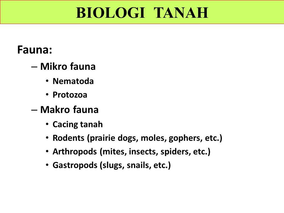 Fauna: – Mikro fauna Nematoda Protozoa – Makro fauna Cacing tanah Rodents (prairie dogs, moles, gophers, etc.) Arthropods (mites, insects, spiders, etc.) Gastropods (slugs, snails, etc.) BIOLOGI TANAH