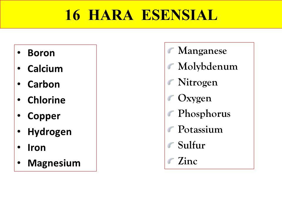 Boron Calcium Carbon Chlorine Copper Hydrogen Iron Magnesium Manganese Molybdenum Nitrogen Oxygen Phosphorus Potassium Sulfur Zinc 16 HARA ESENSIAL