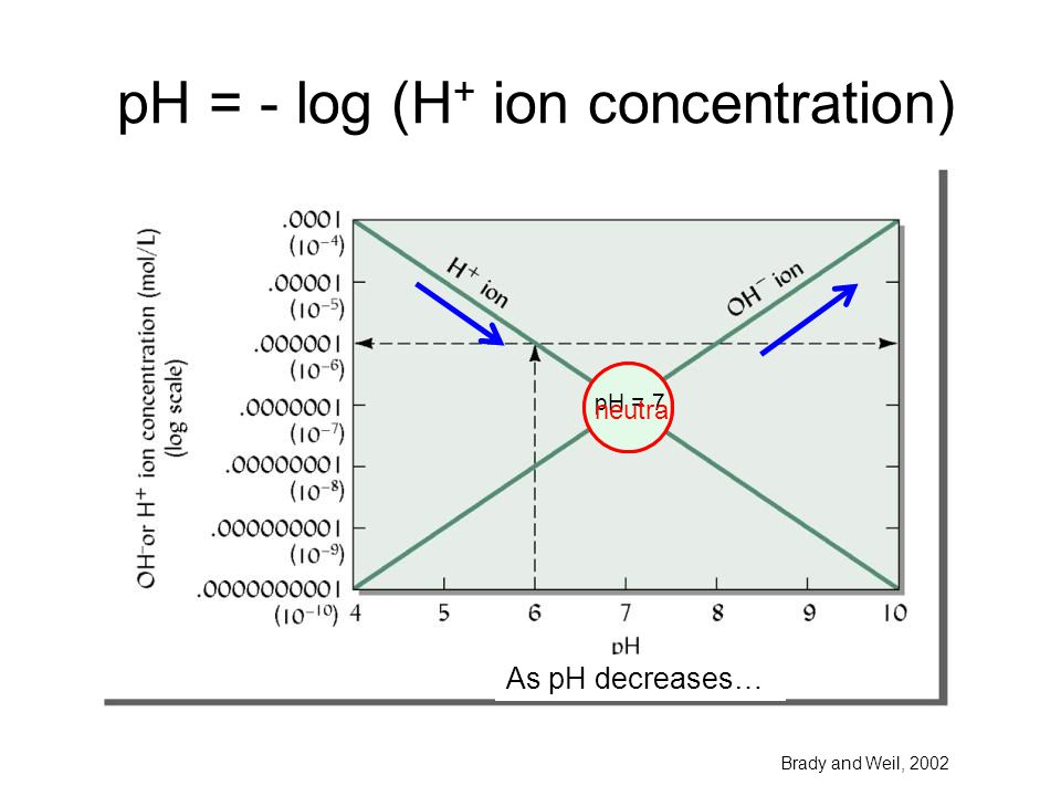 pH = - log (H + ion concentration) Brady and Weil, 2002 As pH increases… As pH decreases… pH = 7 neutral
