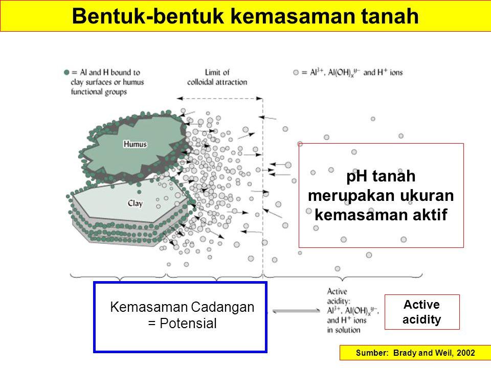 Bentuk-bentuk kemasaman tanah pH tanah merupakan ukuran kemasaman aktif Kemasaman Cadangan = Potensial Active acidity Sumber: Brady and Weil, 2002