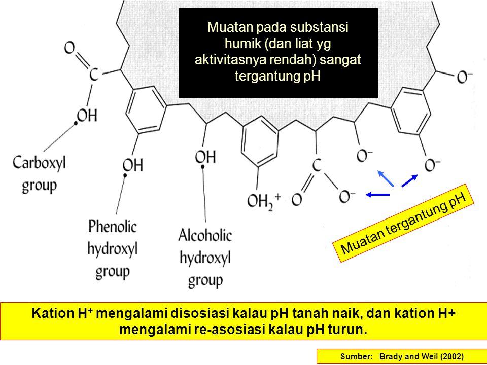 Sumber: Brady and Weil (2002) Muatan tergantung pH Kation H + mengalami disosiasi kalau pH tanah naik, dan kation H+ mengalami re-asosiasi kalau pH tu