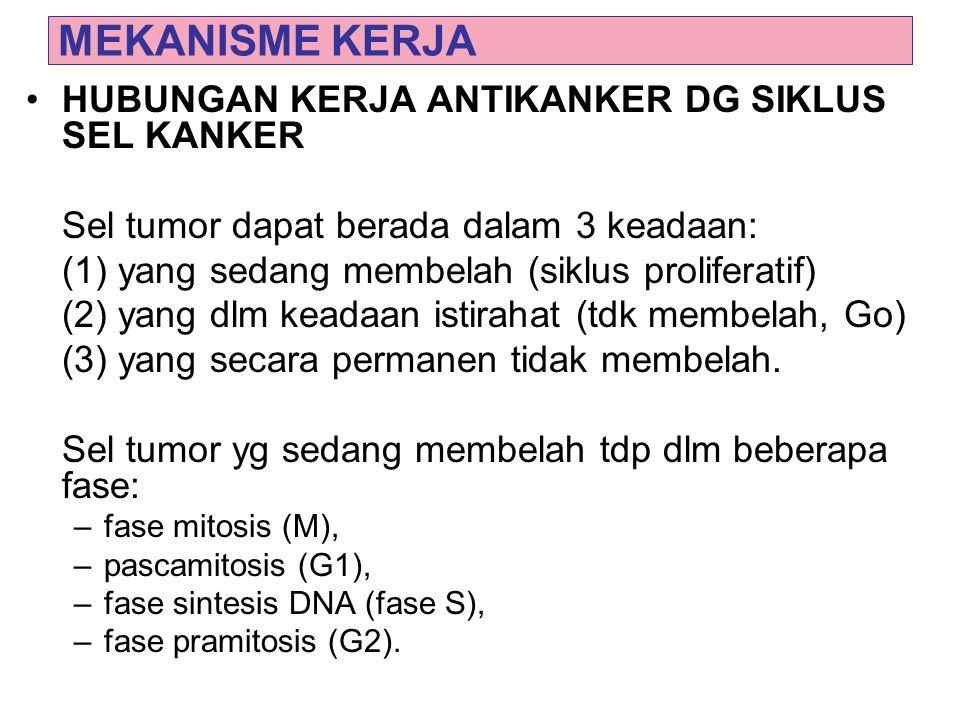 MEKANISME KERJA HUBUNGAN KERJA ANTIKANKER DG SIKLUS SEL KANKER Sel tumor dapat berada dalam 3 keadaan: (1) yang sedang membelah (siklus proliferatif)