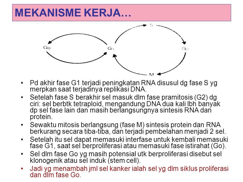 MEKANISME KERJA… Pd akhir fase G1 terjadi peningkatan RNA disusul dg fase S yg merpkan saat terjadinya replikasi DNA. Setelah fase S berakhir sel masu