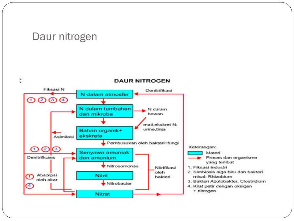 Daur nitrogen