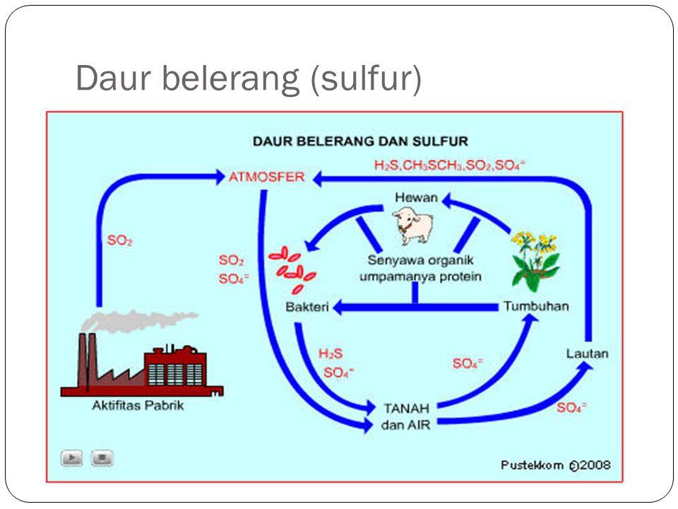 Daur belerang (sulfur)