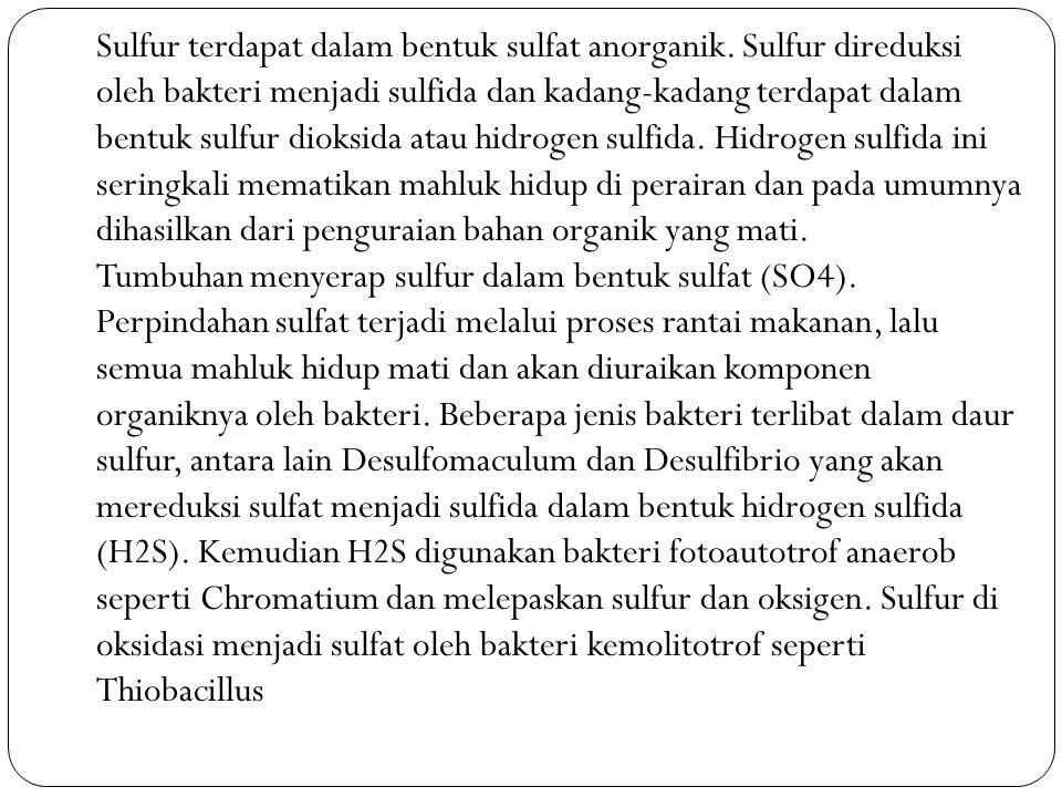 Sulfur terdapat dalam bentuk sulfat anorganik. Sulfur direduksi oleh bakteri menjadi sulfida dan kadang-kadang terdapat dalam bentuk sulfur dioksida a