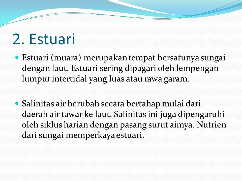 2. Estuari Estuari (muara) merupakan tempat bersatunya sungai dengan laut. Estuari sering dipagari oleh lempengan lumpur intertidal yang luas atau raw