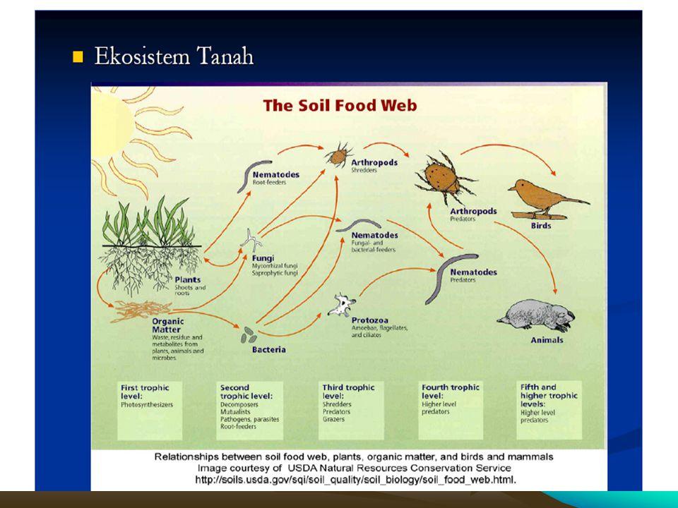 Ekosistem Tanah