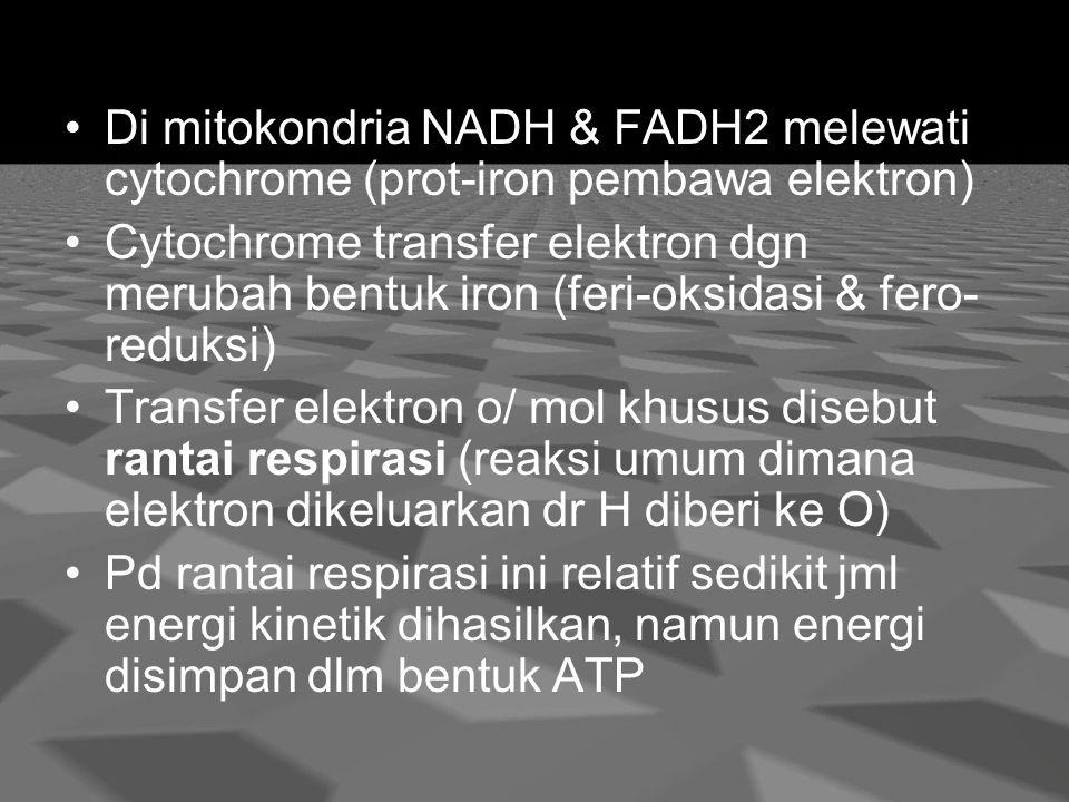 Di mitokondria NADH & FADH2 melewati cytochrome (prot-iron pembawa elektron) Cytochrome transfer elektron dgn merubah bentuk iron (feri-oksidasi & fero- reduksi) Transfer elektron o/ mol khusus disebut rantai respirasi (reaksi umum dimana elektron dikeluarkan dr H diberi ke O) Pd rantai respirasi ini relatif sedikit jml energi kinetik dihasilkan, namun energi disimpan dlm bentuk ATP