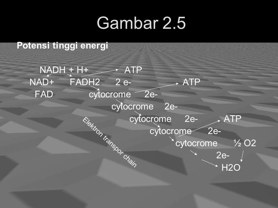 Gambar 2.5 Potensi tinggi energi NADH + H+ ATP NAD+ FADH2 2 e- ATP FAD cytocrome 2e- cytocrome 2e- cytocrome 2e- ATP cytocrome 2e- cytocrome ½ O2 2e- H2O Elektron transpor chain