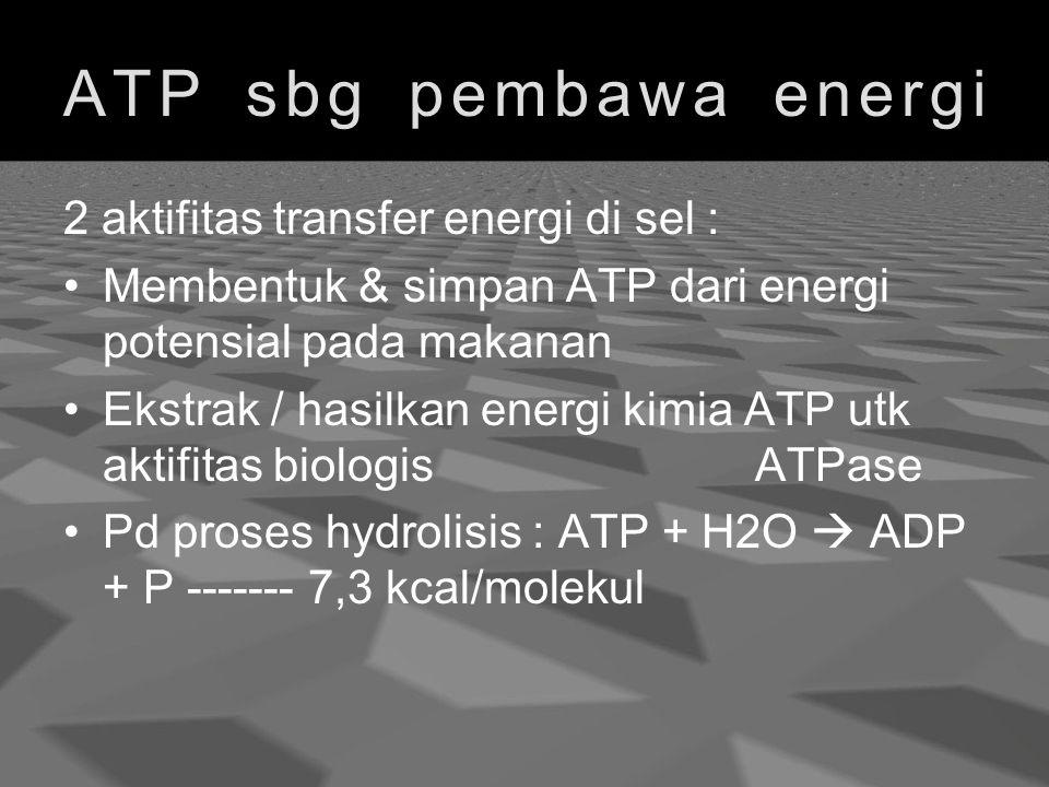 ATP sbg pembawa energi 2 aktifitas transfer energi di sel : Membentuk & simpan ATP dari energi potensial pada makanan Ekstrak / hasilkan energi kimia ATP utk aktifitas biologis ATPase Pd proses hydrolisis : ATP + H2O  ADP + P ------- 7,3 kcal/molekul