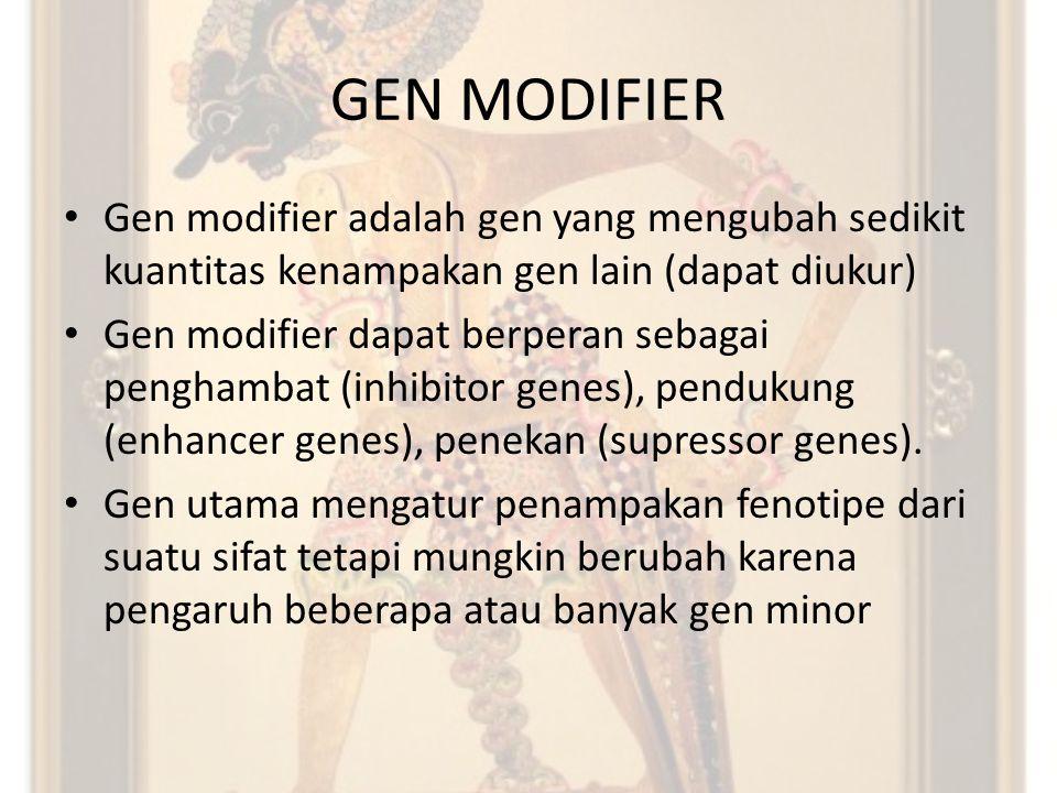 GEN MODIFIER Gen modifier adalah gen yang mengubah sedikit kuantitas kenampakan gen lain (dapat diukur) Gen modifier dapat berperan sebagai penghambat (inhibitor genes), pendukung (enhancer genes), penekan (supressor genes).