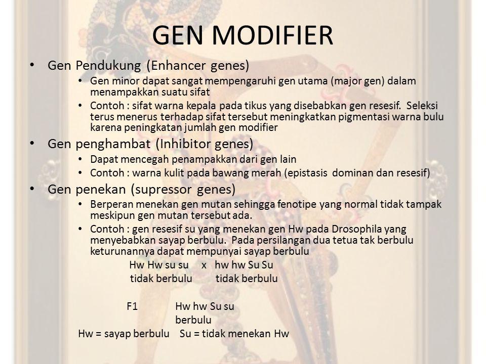 GEN MODIFIER Gen Pendukung (Enhancer genes) Gen minor dapat sangat mempengaruhi gen utama (major gen) dalam menampakkan suatu sifat Contoh : sifat war
