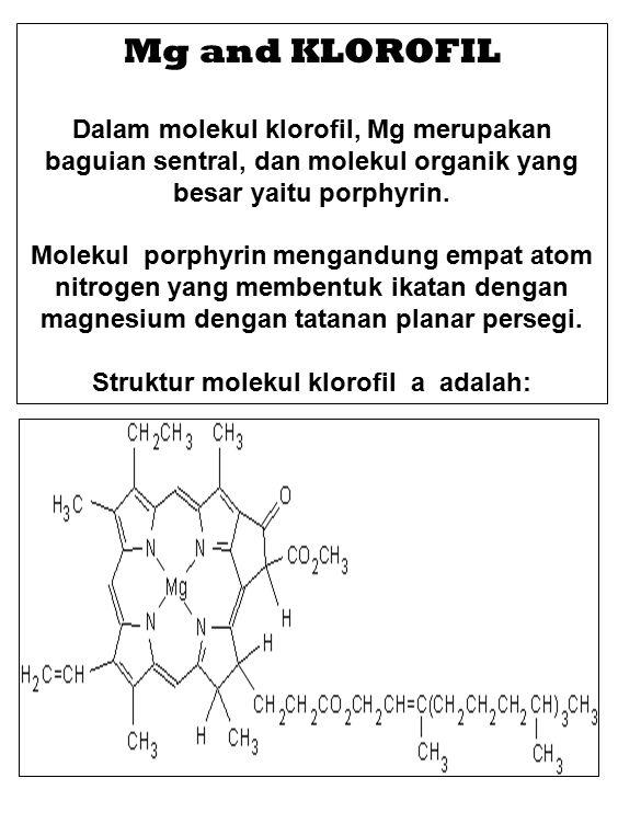 Mg and KLOROFIL Dalam molekul klorofil, Mg merupakan baguian sentral, dan molekul organik yang besar yaitu porphyrin.