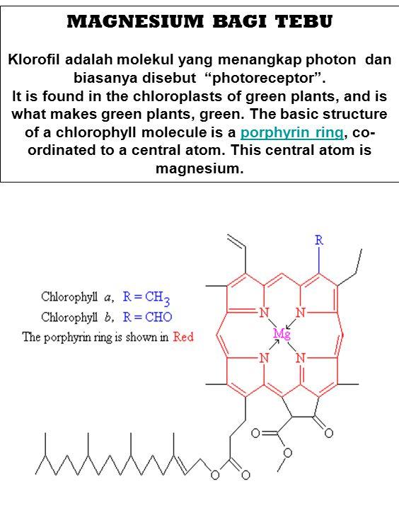 MAGNESIUM BAGI TEBU Klorofil adalah molekul yang menangkap photon dan biasanya disebut photoreceptor .