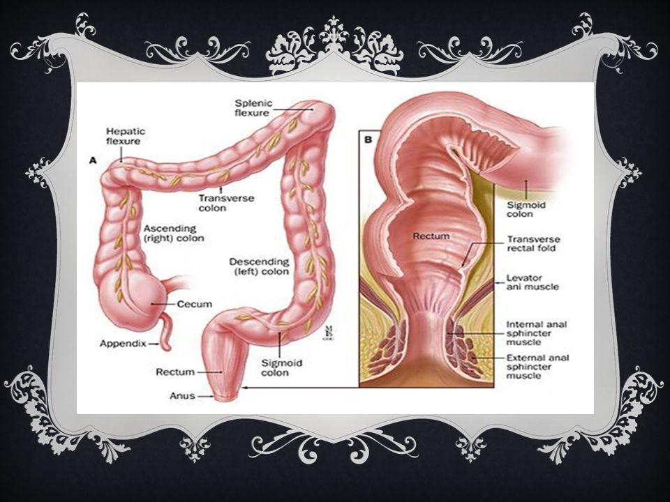 Struktur Anus Anus adalah lubang di ujung saluran pencernaan dimana limbah (tinja, kotoran) keluar dari dalam tubuh atau bagian paling akhir dari salu